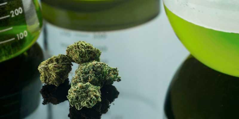 Cannabis laboratory insurance - photo of marijuana processing lab equipment
