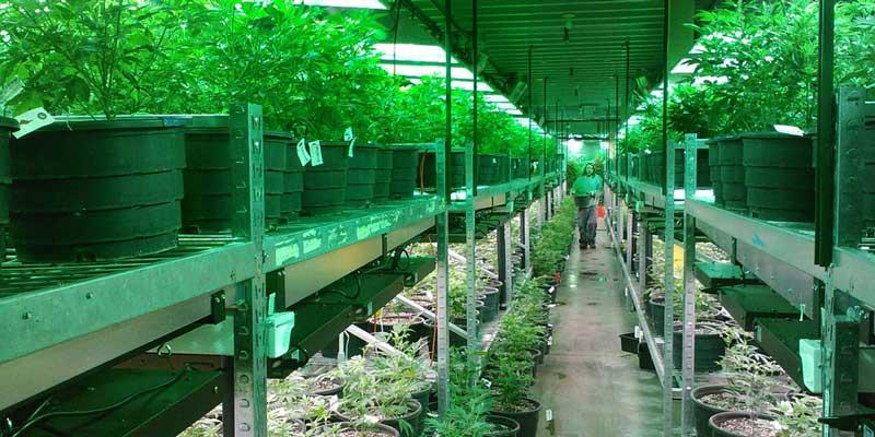 Cannabis manufacturing insurance - marijuana manufacturing facility photo