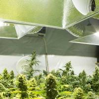 Cannabis building insurance - marijuana grow photo - Cannabis Insurance Company