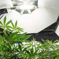Custom cannabis insurance - photo of marijuana grow - Cannabis Insurance Company