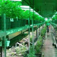 Cannabis manufacturing insurance - marijuana manufacturing facility photo - Cannabis Insurance Company