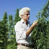 Cannabis farm workers compensation insurance - photo of marijuana worker - Cannabis Insurance Company
