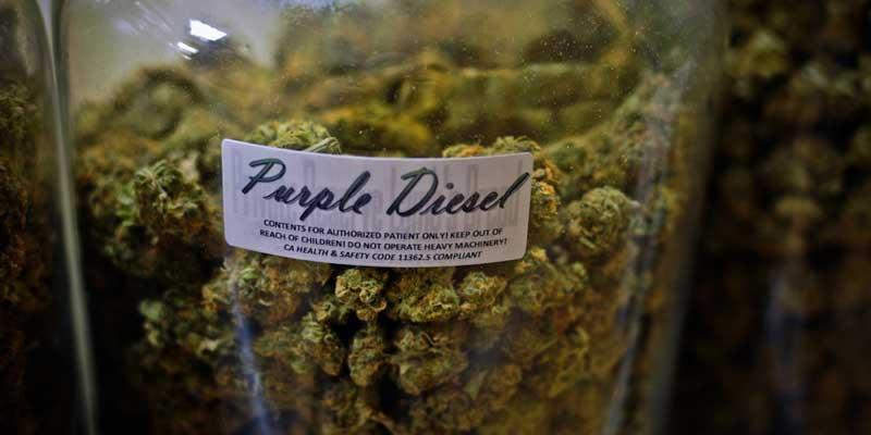 Cannabis and marijuana insurance for dispensaries and cultivation - photo of purple diesel