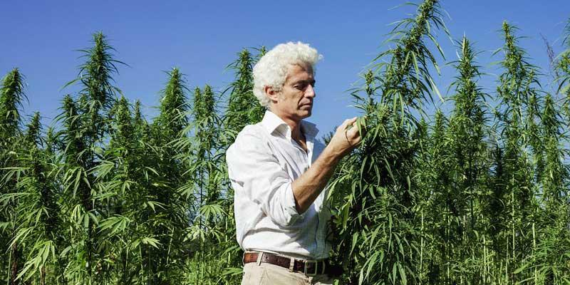 Colorado Cannabis Growth - photo of cannabis worker